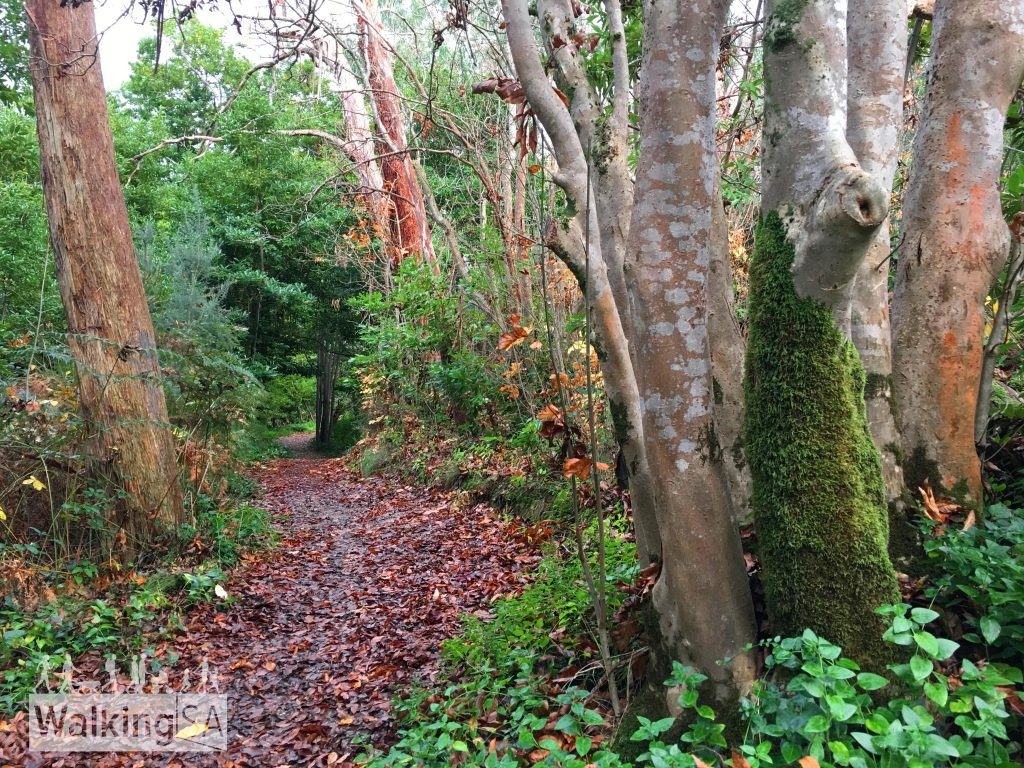 The RSL walk meanders through forest, beside the Sparkes Gully creek. The trail an Easy Walk, suitable for people of all abilities. It is suitable for wheelchair access, as it is a consistent 1m wide, small gravel, gentle slopes, a bridge and no steps.