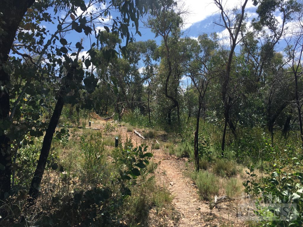 The Roachdale Nature Trail and Roachdale Reserve are recovering from the 2015 Sampson Flat bushfires