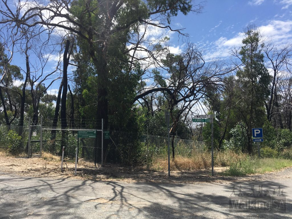The Roachdale Nature Trail begins behind the gate on the corner of Wattle Road and South Para Road, 2.6km north of Kersbrook.