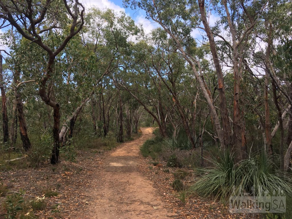 The fire trail on the Hale Conservation Park Loop. Most of the loop is walking trail