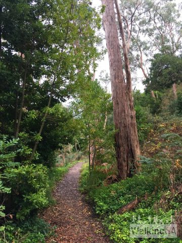 The trail an Easy Walk, suitable for people of all abilities. It is suitable for wheelchair access, as it is a consistent 1m wide, small gravel, gentle slopes, a bridge and no steps.