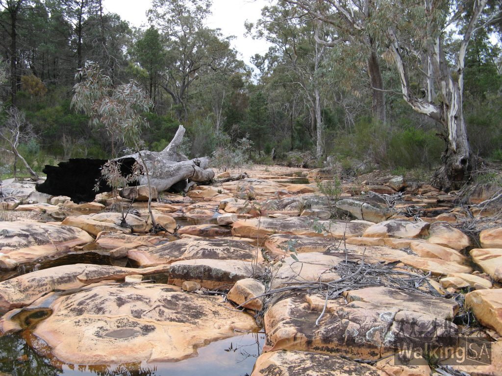 The walk follows Alligator Creek