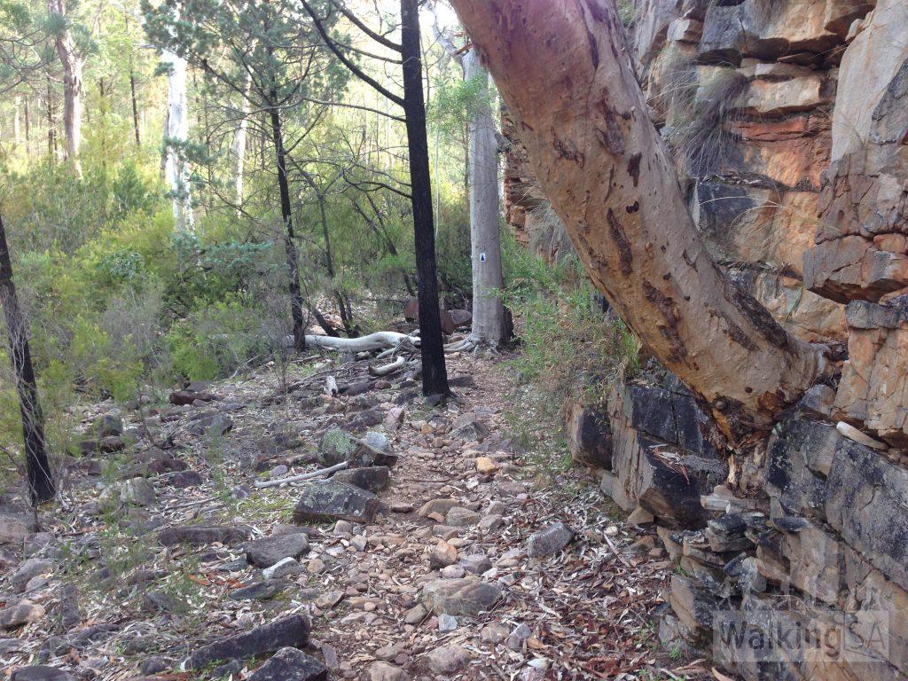 Walking along the trail beside Alligator Creek