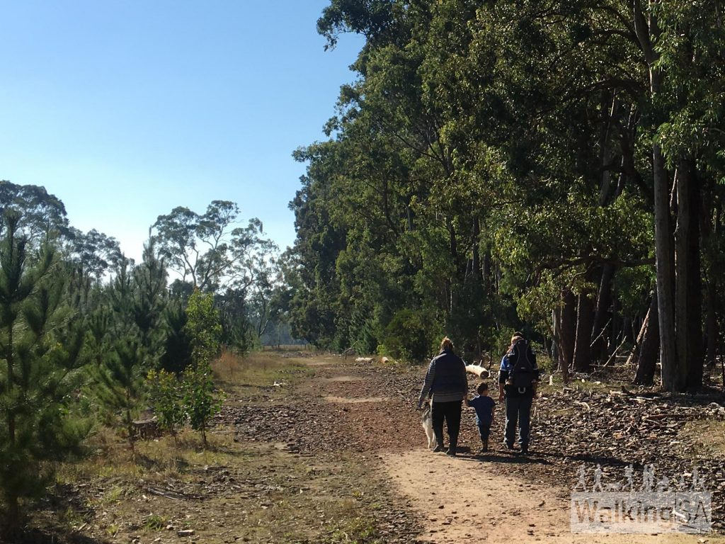 Walking through the pine and native forest on the Chookarloo Walk