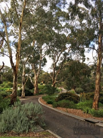 Follow the accessible trails for a loop around Wittunga Botanic Garden