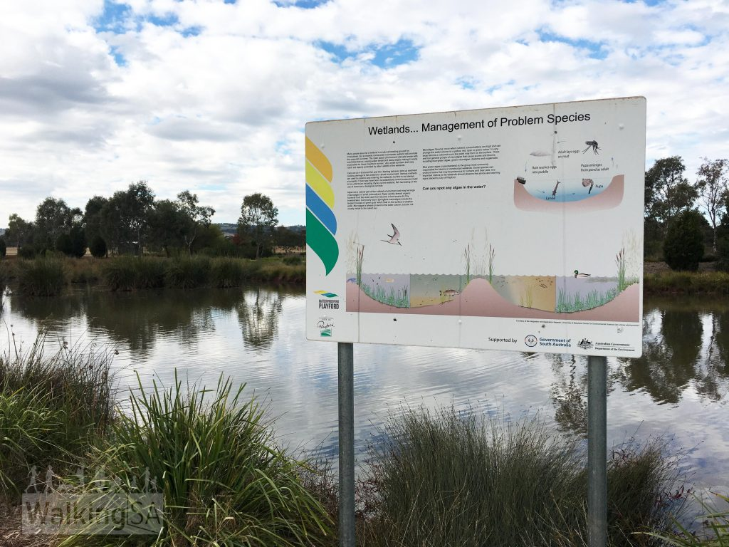 Interpretive sign at Munno Para Wetlands which communicates information about fish and algae in the wetland