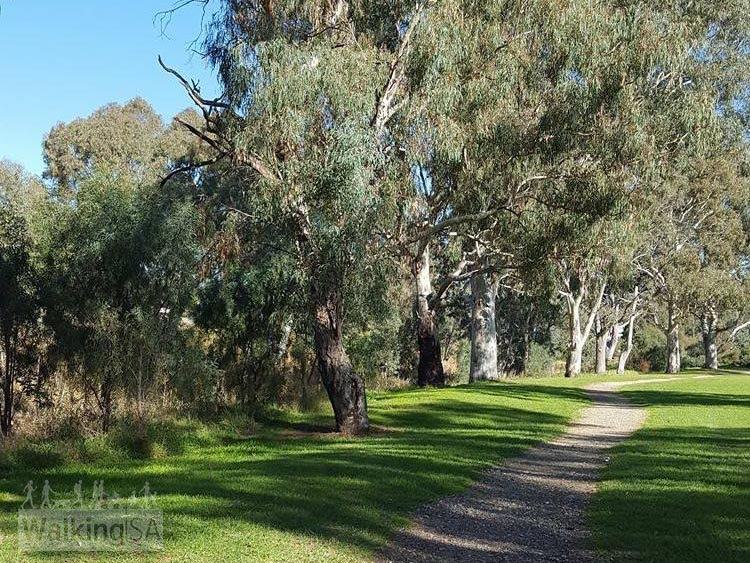 The Gawler Rivers (Tapa Pariara) Path follows the river through the pleasant Clonlea Reserve