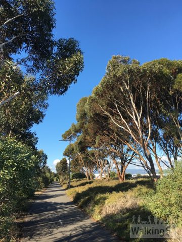 The trail is separated from Sir Donald Bradman Drive by trees