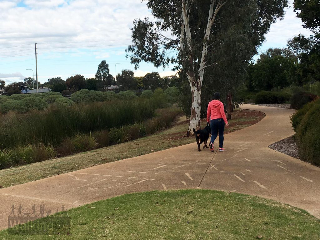 The walking trails at Munno Para Wetlands are either of wide bitumen (as pictured) or compacted gravel, and suitable for dog walking, prams and those with mobility aids, including wheelchairs.