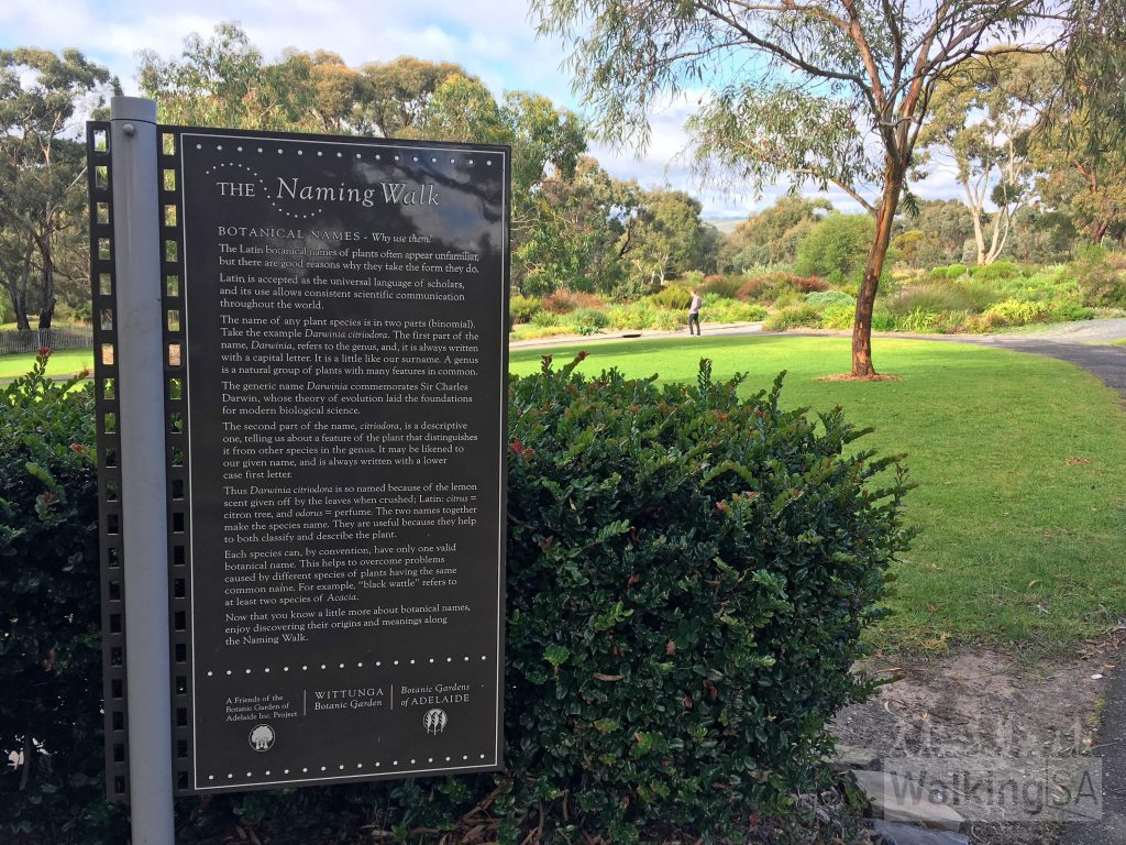 The Naming Walk is a self-guided wander around Wittunga Botanic Garden. There are 24 interpretative signs like this one installed throughout the garden, stationed alongside the relevant plant.