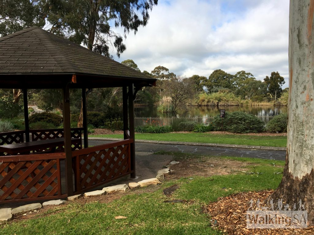 There are picnic areas and lawns around the lake at Wittunga Botanic Garden