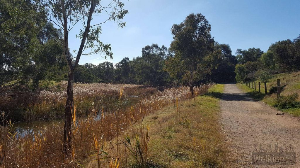 Walking trail along the North Para River. The walking trail heading north in Clonlea Reserve is compacted gravel.