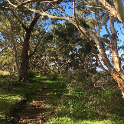 Punchbowl Link Trail (Sundews Carpark to Punchbowl Lookout)
