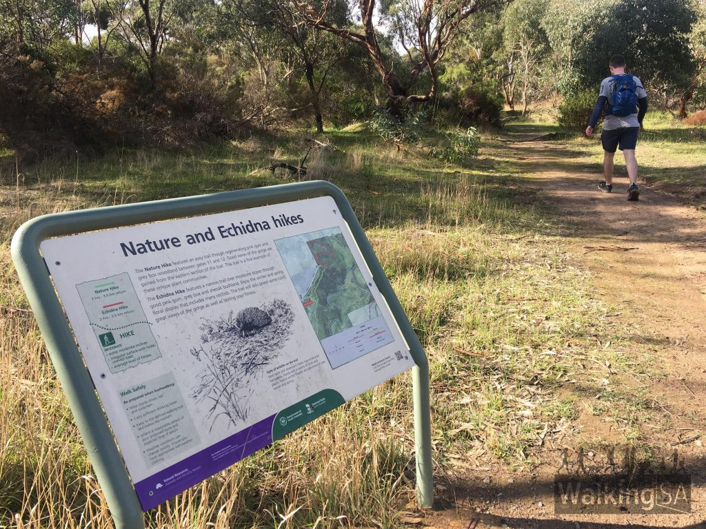The Nature Hike begins from the Sundews Carpark, near Gate 11 on Piggot Range Road. It's easy to combine the two hikes into a 7km hike.