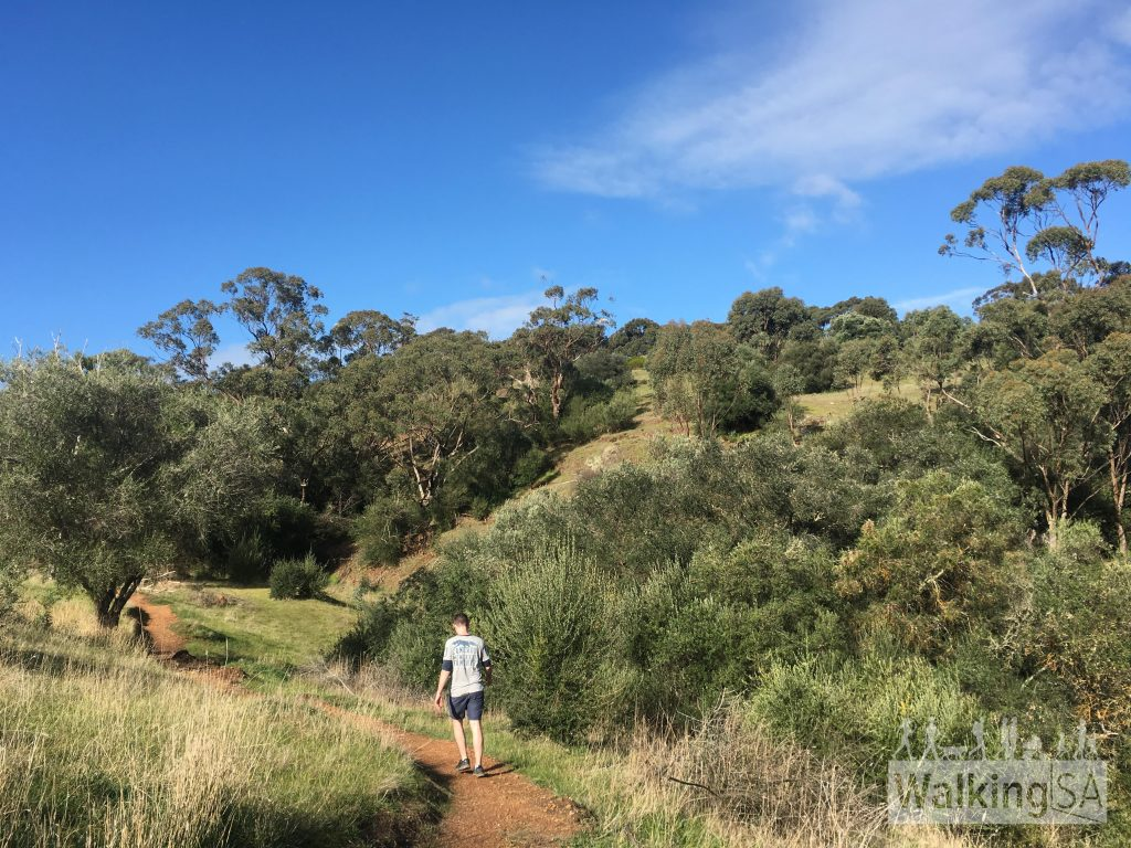 The new hiking path from Sundews to the Punchbowl Lookout follows the gullies out to the lookout