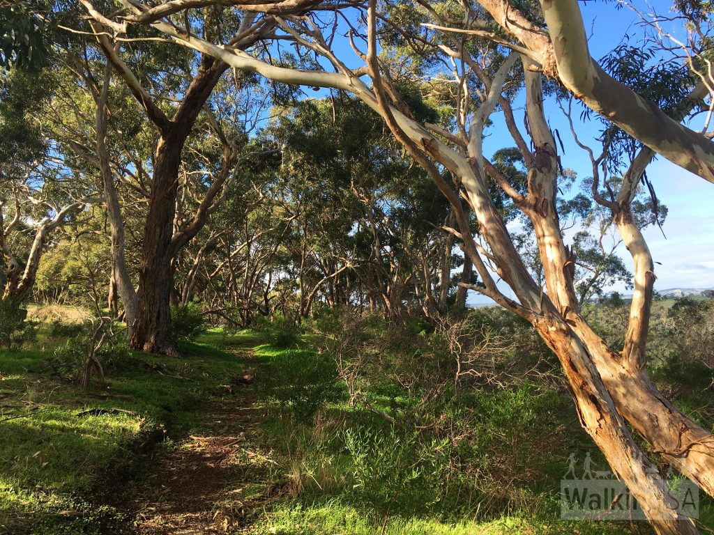 Walking from Sundews to the Punchbowl Lookout