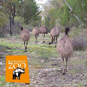 Spring Bush Walk in Monarto Zoo