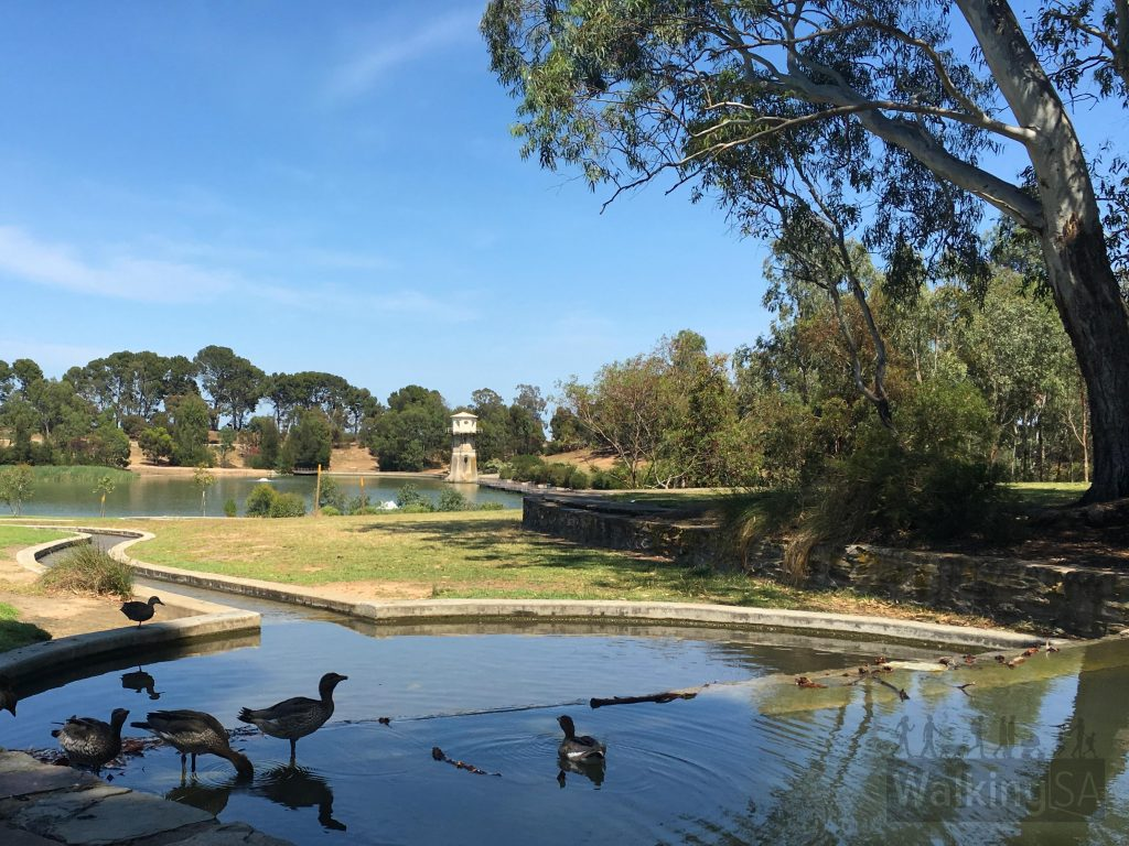 Walking trails and ducks at Thorndon Park