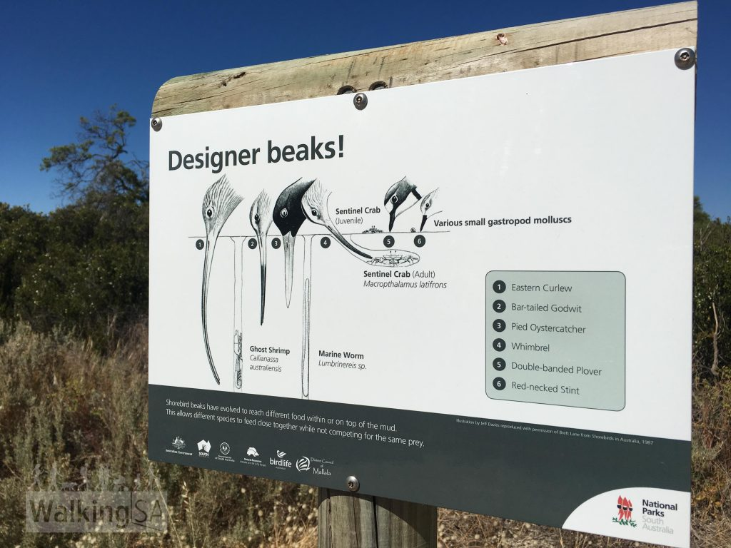 An example of the interpretive signs along the Third Creek Trail at Thompson Beach