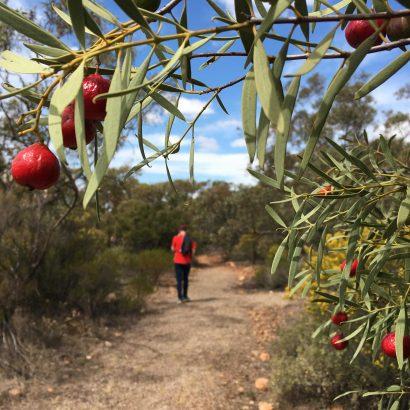 Quorn Foothill Flora walk (Native Flora Reserve)
