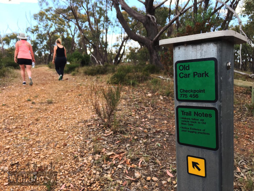 Some of the Wymans Hike follows a fire track which is an old road to a former carpark above the Cascades