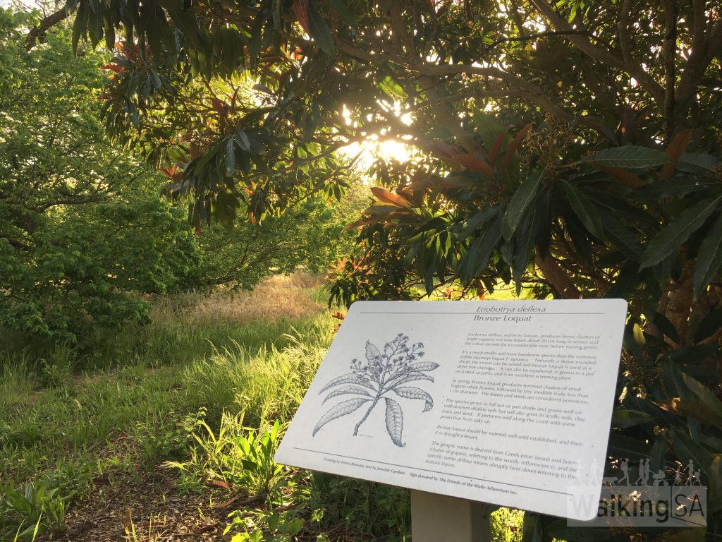 Some of the trees in Waite Arboretum have interpretive signs, although the iPhone and Android app have more detailed info