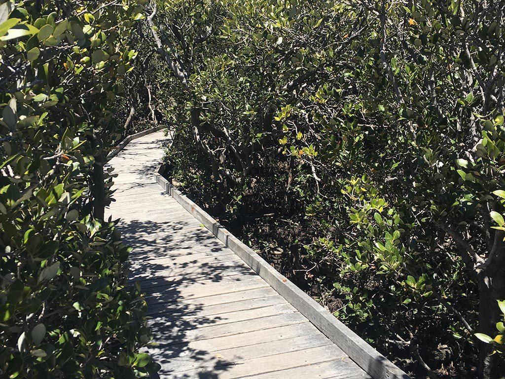 St Kilda Mangrove Trail