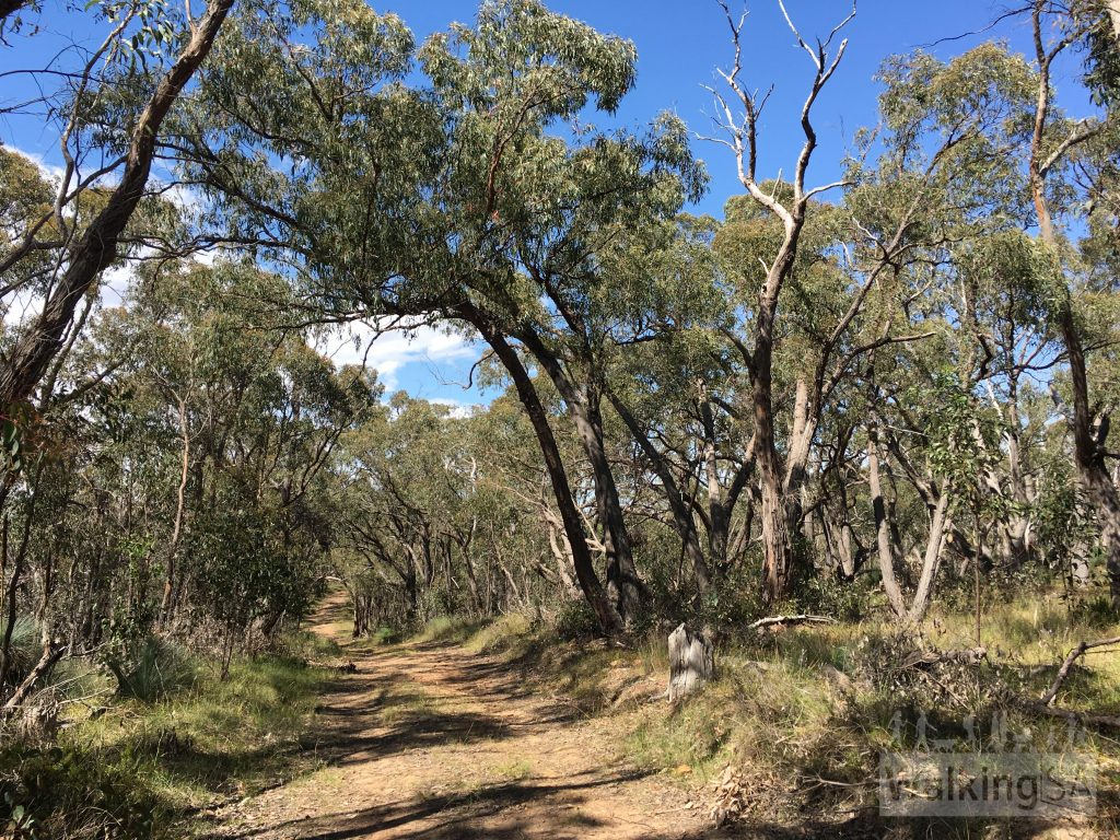 The Ridgetop Walk is considered wheelchair friendly. The trail is a wide firetrack, with very little loose gravel, but with gentle slopes