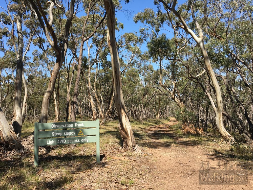 The Observation Track is a side track off of the Ridgetop Walk