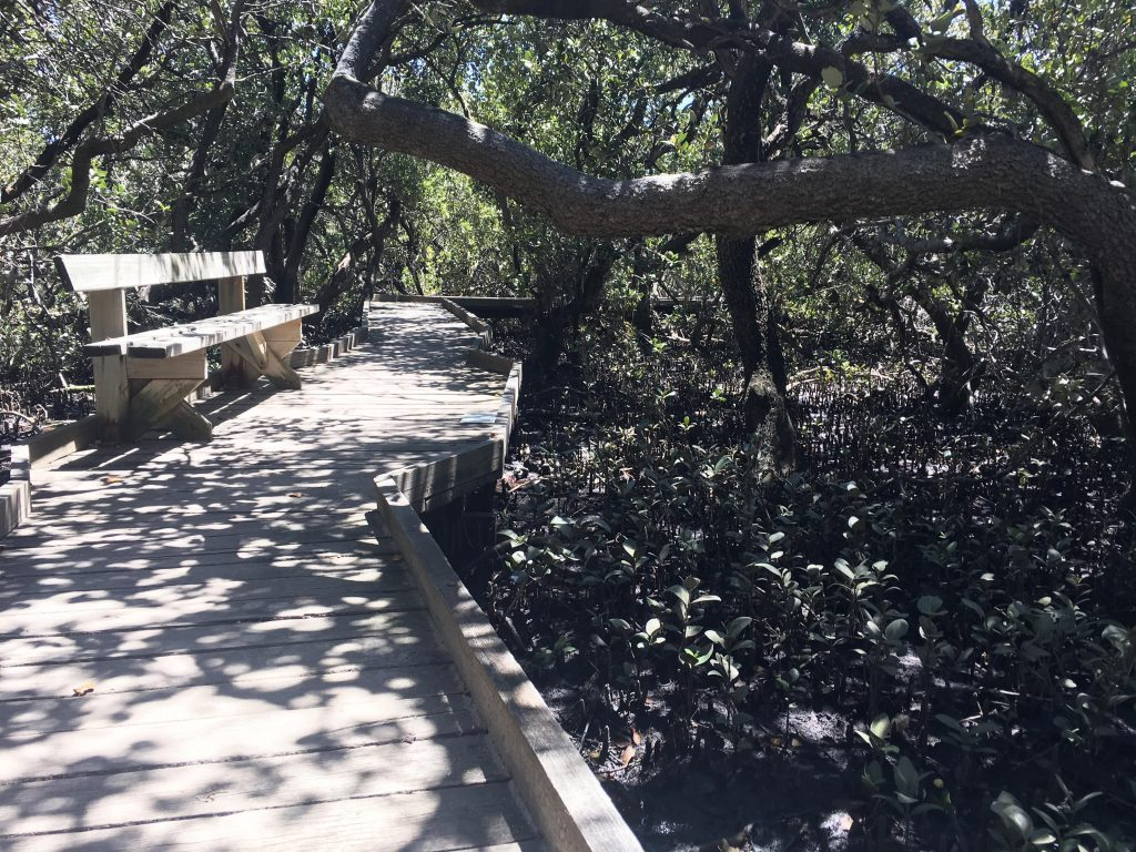 The St Kilda Mangrove Trail meanders through the dense, shady mangroves