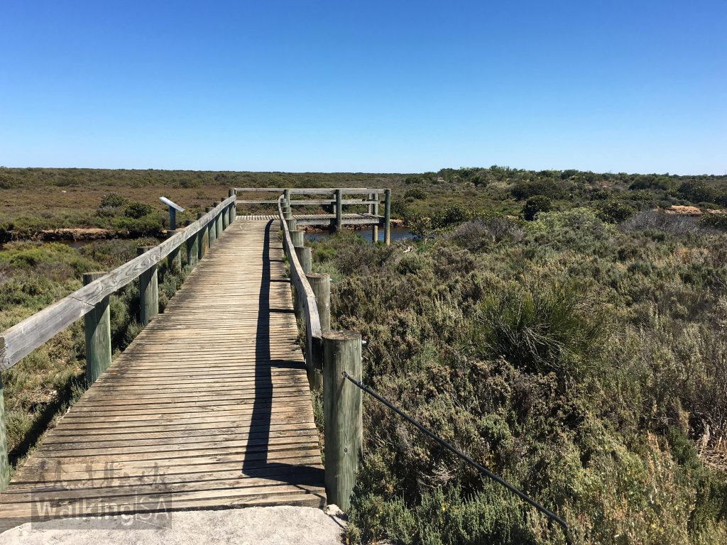 The lookout over the creek at the end of the Samphire Discovery Trail