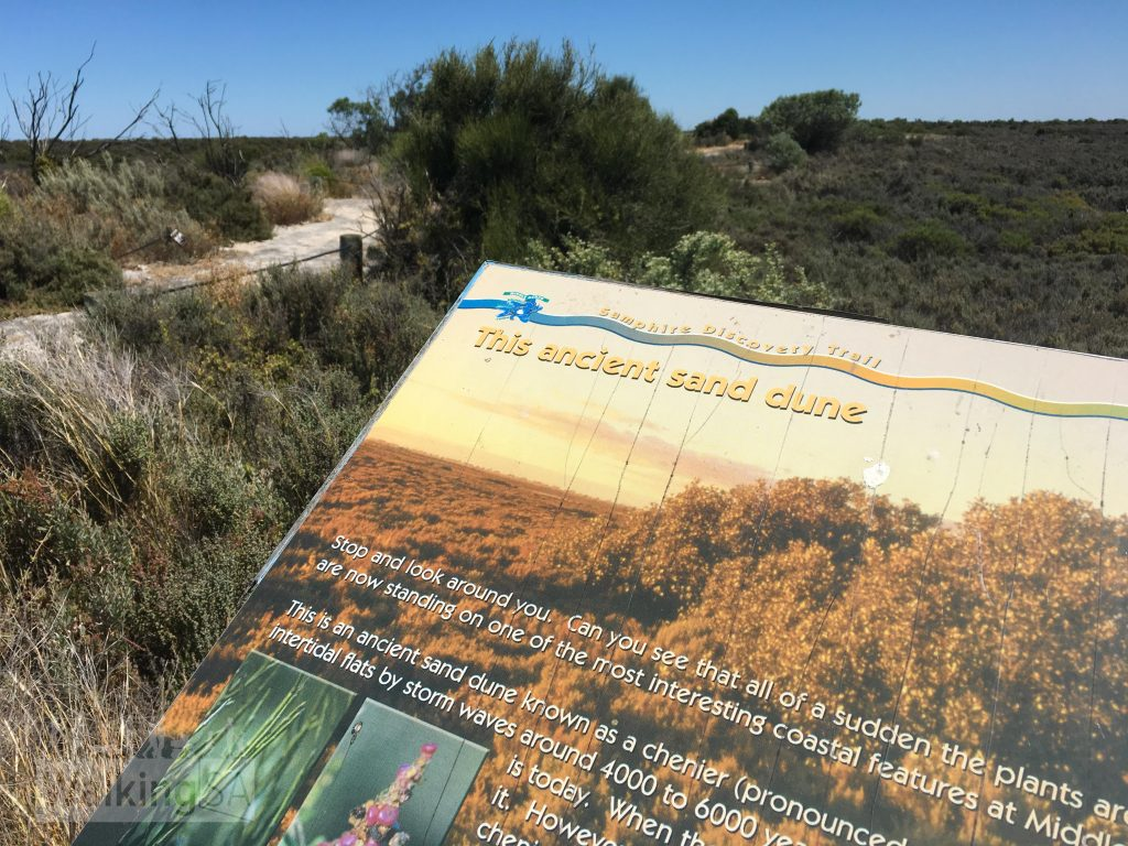 The trail follows a chenier, which is an ancient sand dune from 4,000 to 6,000 years ago.