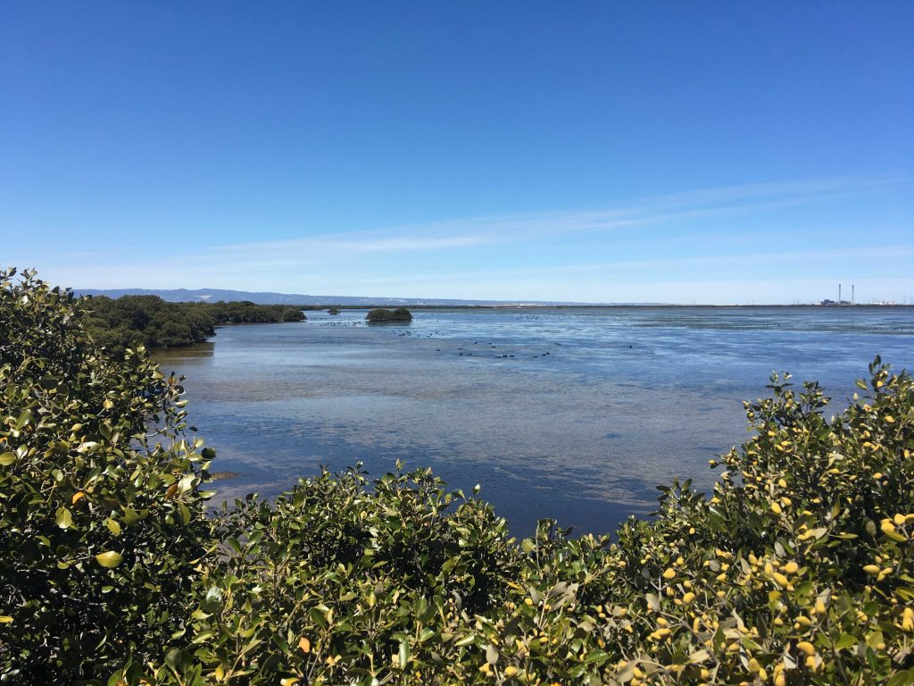 The view from the lookout at the end of the St Kilda Mangrove Trail, looking out into Barker Inlet