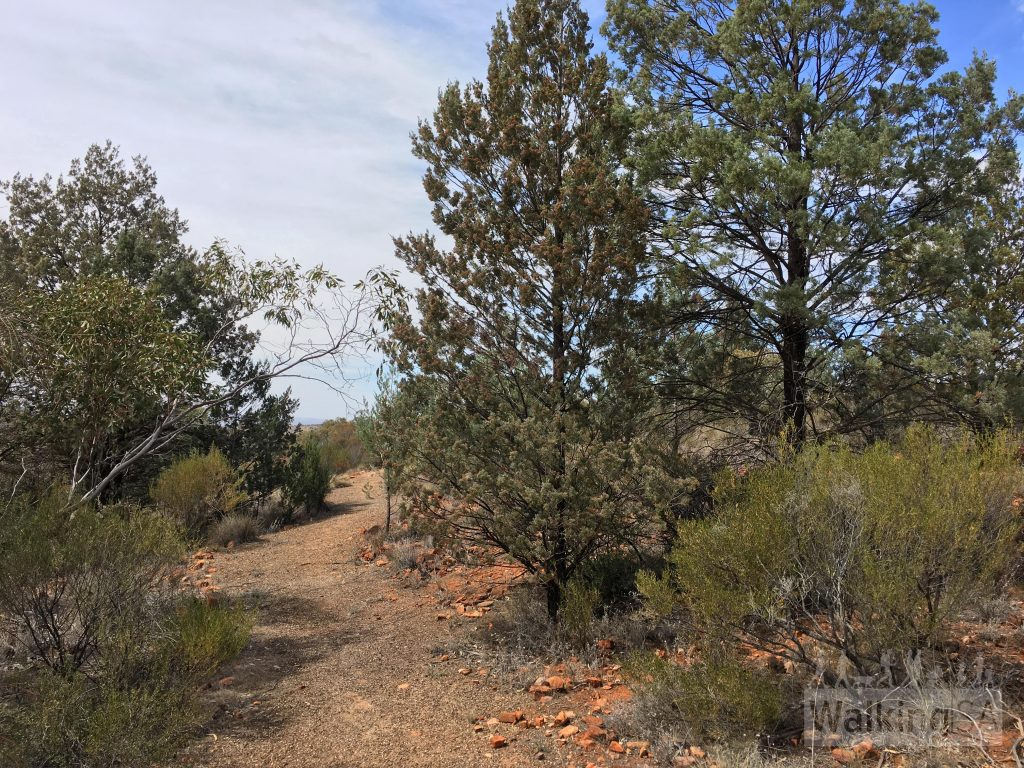 The walking trail in the Native Flora Reserve (Quorn Foothill Flora Walk)