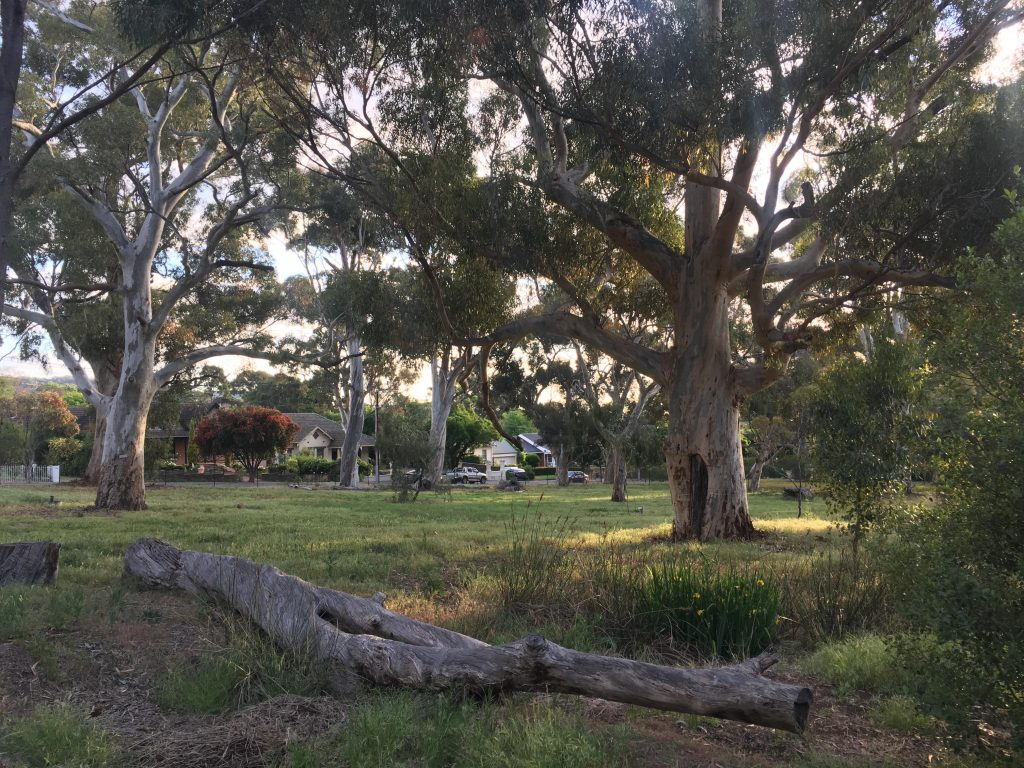 The Waite Arboretum
