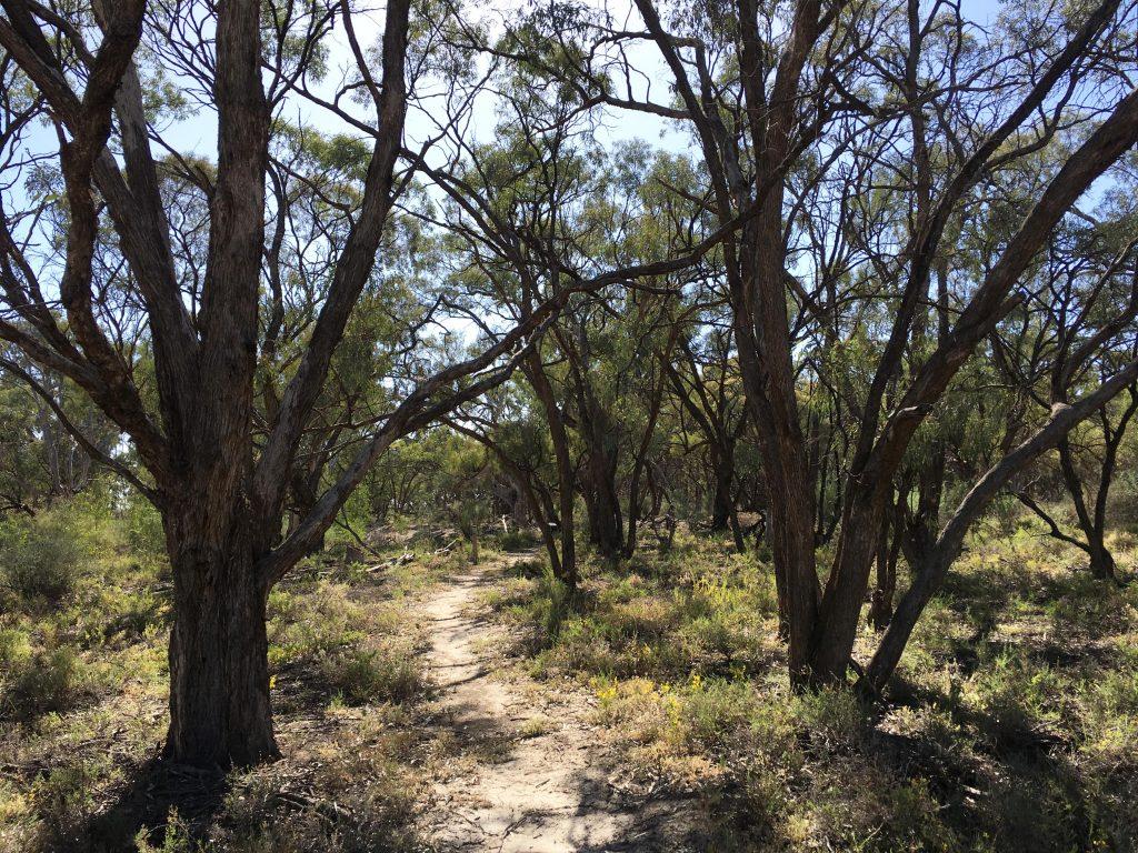 Kai Kai Nature Trail