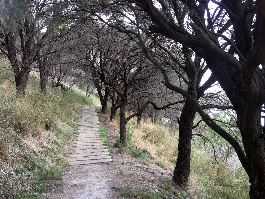 Most of the trail up Mt Schank is a series of limestone steps