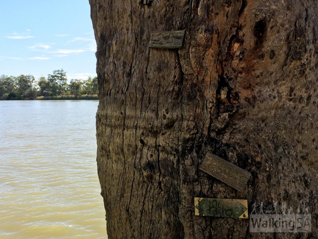 Old flood markers on a tree beside the river