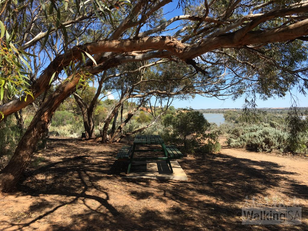 Picnic bench and shade at the Waikerie Clifftop Walk lookout