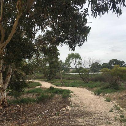 Swanport Wetlands, Murray Bridge