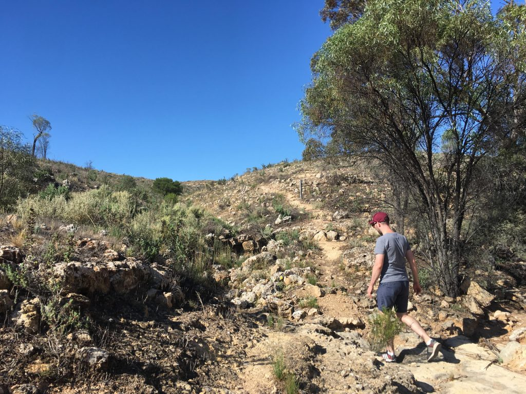The Herons Bend Walk involves climbing this hill, up to some old sea bed oyster beds, and views of the Murray