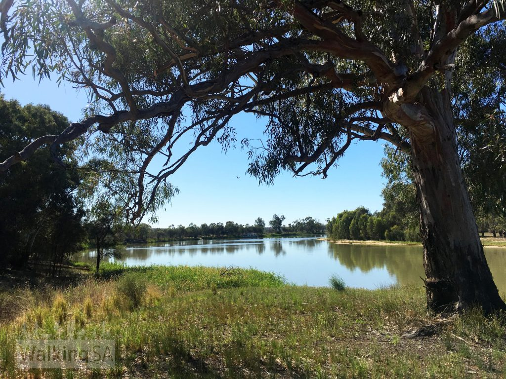 The Murray River on the Overland Corner Walking Trails