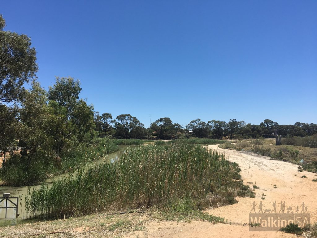 The Wetland Walking Trail at Berri