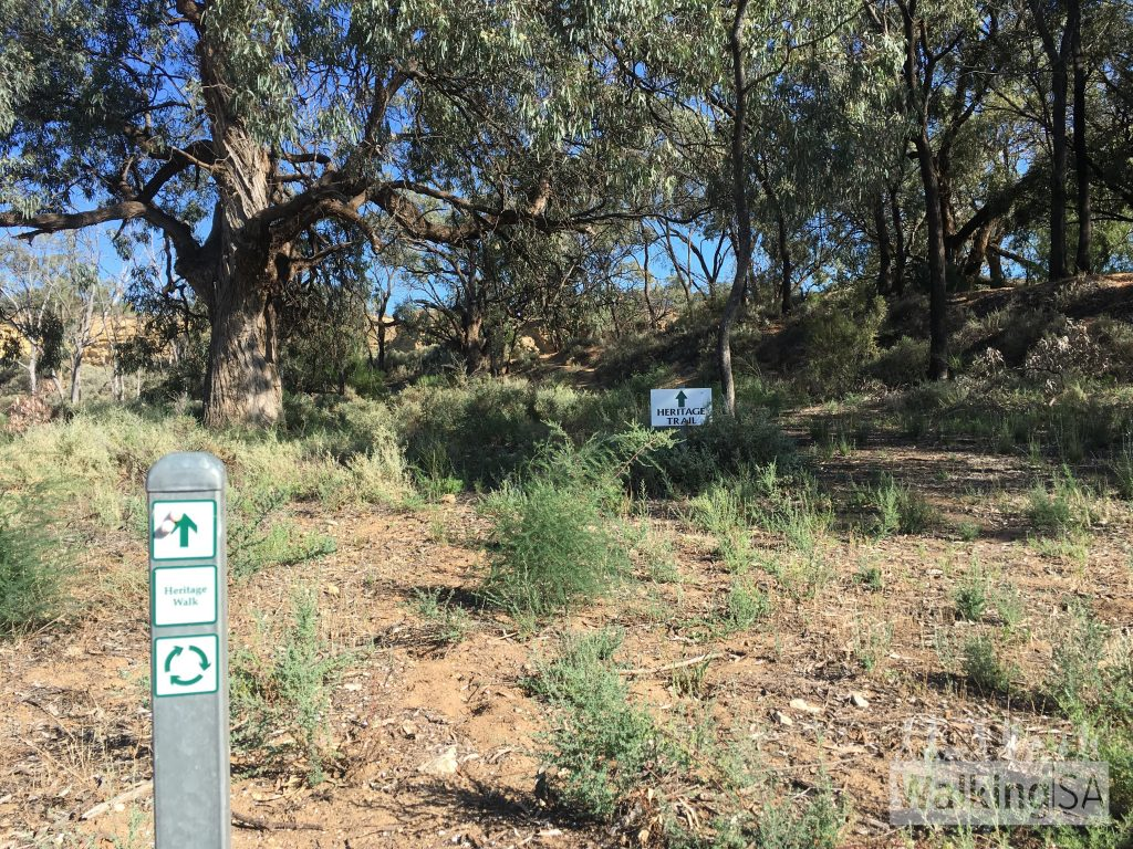 The start of each of the 3 trails at the carpark appears a little overgrown, but the trails are marked