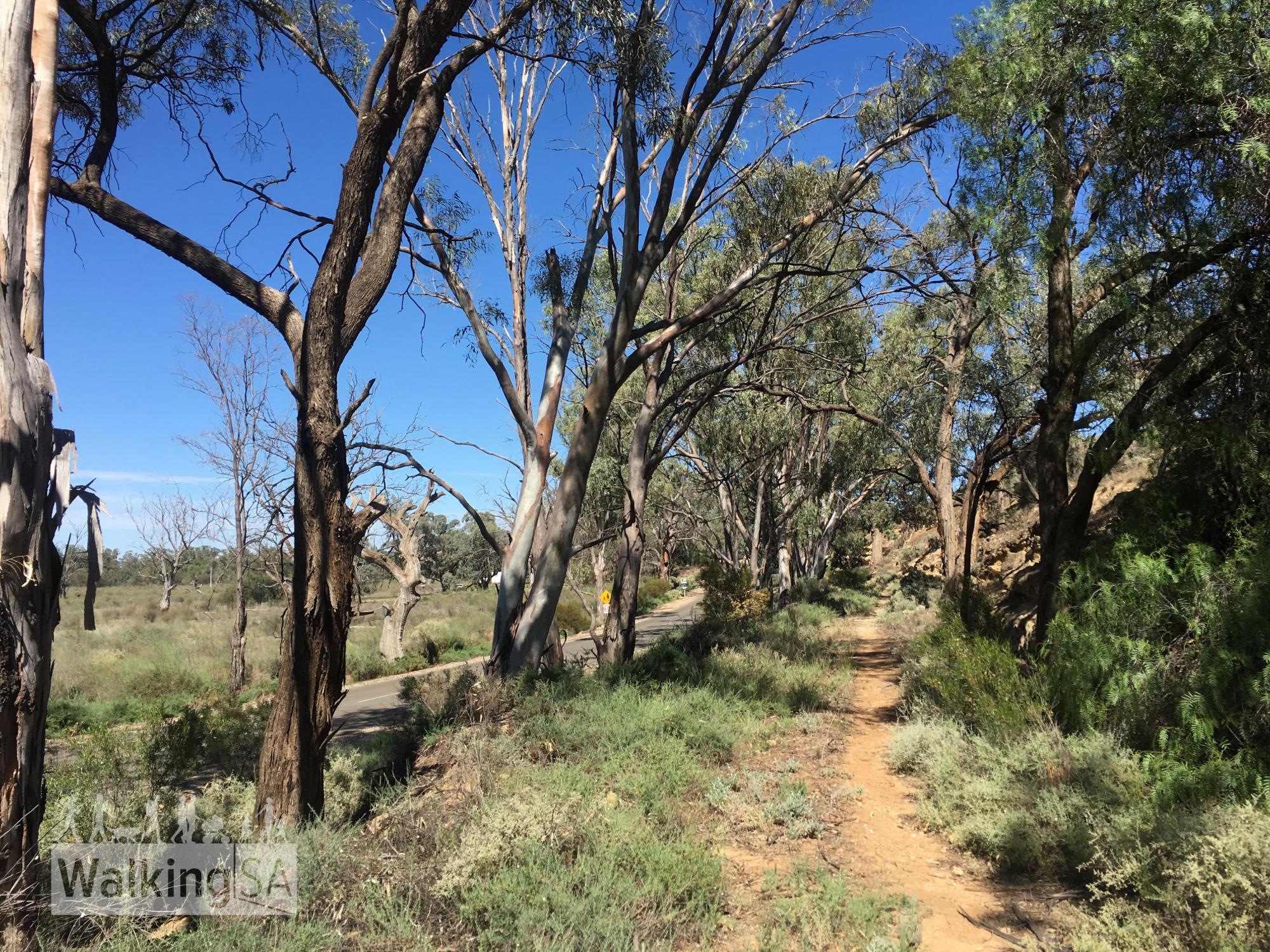 Overland Corner Walking Trails   3 Hiking Trails   Walking SA