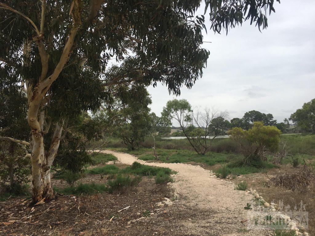Walking in Swanport Wetlands