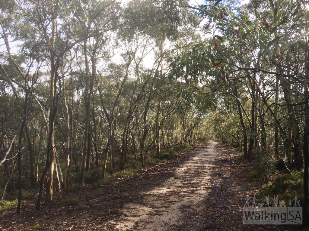 The Mack Creek Hike and Horseplay Trail follow this fire track which is parallel to a bitumen road