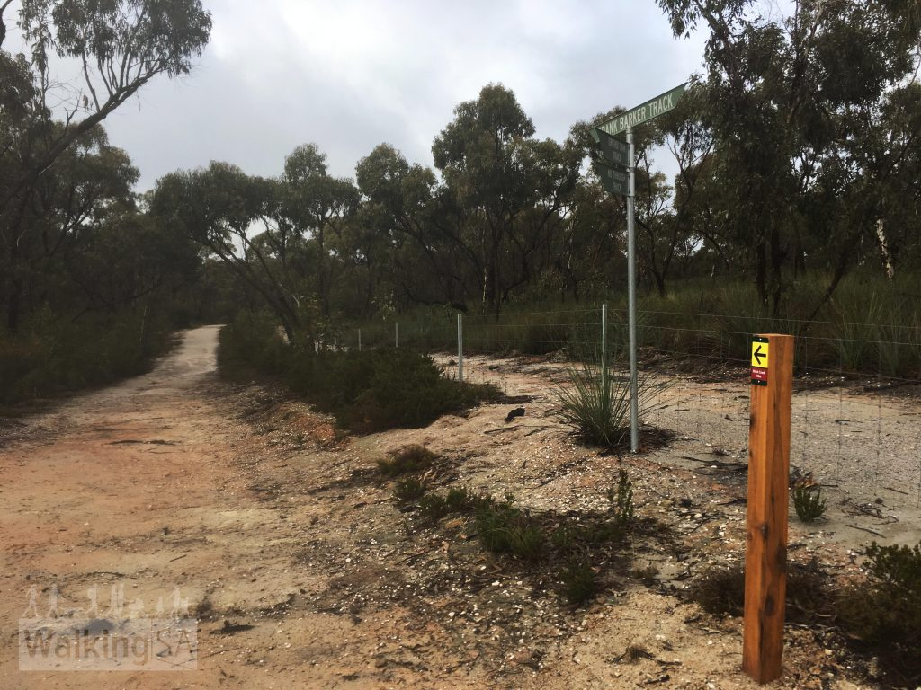 The Mack Creek Hike and Horseplay Trail follows a firetrack along the southern boundary of the conservation park. Forestry SA managed scrub land is on the other side