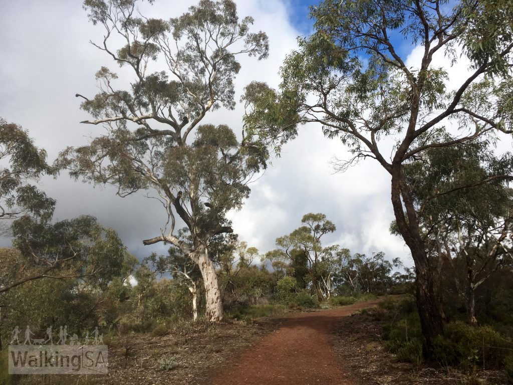 The Mack Creek Hike and Horseplay Trail follow some fire tracks through the southern section of Para Wirra Conservation Park