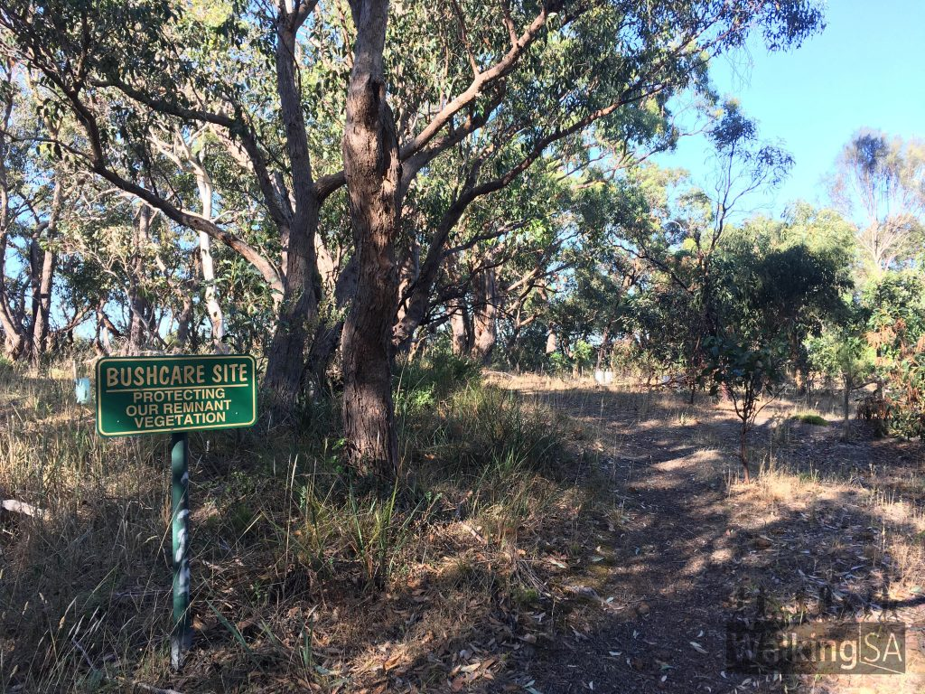 Thanks to the work of Trees for Life, Department of Planning, Transport & Infrastructure (DPTI) and the City of Onkaparinga the area has protected 85 indigenous plant species